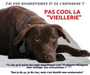 Contre les rhumatismes de votre animal